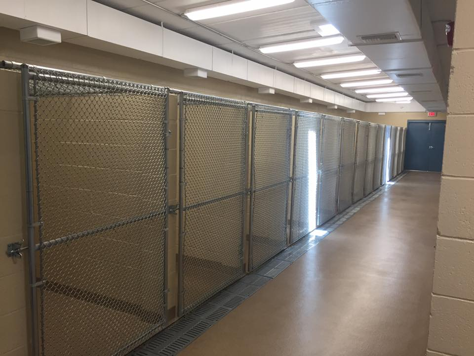 chain link dog kennel fence